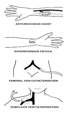 Angelite Nurses: GENITOURINARY SYSTEM