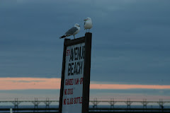 Gulls on the Beach (Manistee)