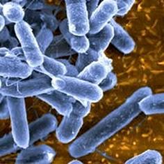 micoplasma_batterio_di_piccole_dimensioni