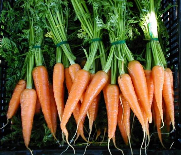 zanahoria oxiuros