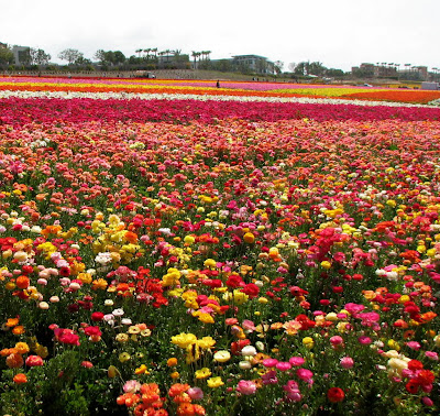 Carlsbad flower fields discount coupon 2019