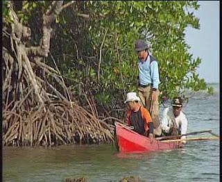 Mangrove at Karimunjawa (Jepara Tourism Info)