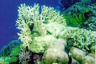 Under the Sea of Karimunjawa (Jepara Tourism Info)