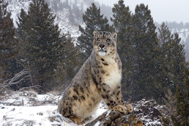 Lion Animal Wallpaper Poderosos Animales En La Nieve Taringa