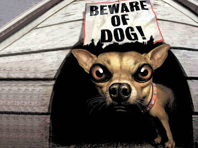 beware-of-dog-funny-pets-wallpapers.jpg