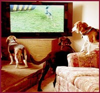 Do dogs watch television?