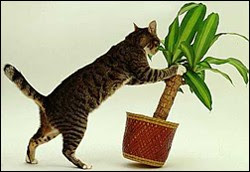 Pets are at risk outside eating plants like Oleander, Azalea, Lilies and Sago Palm.