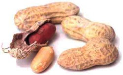 Peanuts for curing nut allergy