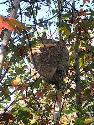 The City Birder 10 01 2007 11 01 2007