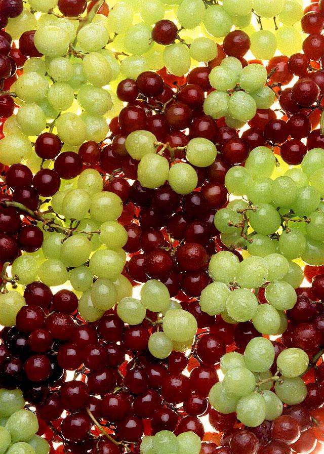 Rumah Kimia Perubahan Mutu Buah Anggur Impor Vitis Vinivera Pada Berbagai Suhu Penyimpanan