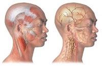 Dolor de cabeza, cefalea, jaqueca o cefalalgia