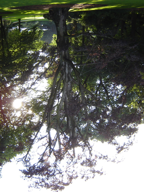 [tree.jpg]
