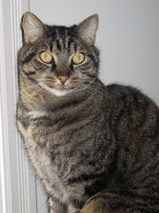 My cat Morrie