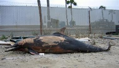 [capt.a18cb3a2b5fb4e16860c144caab53a9a.slaughtered_dolphins_la108]