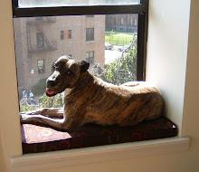 Sidney Back Home in Brooklyn (below)