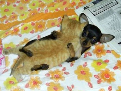 Pics Of Puppies And Kittens Together. of a puppy and kitten on