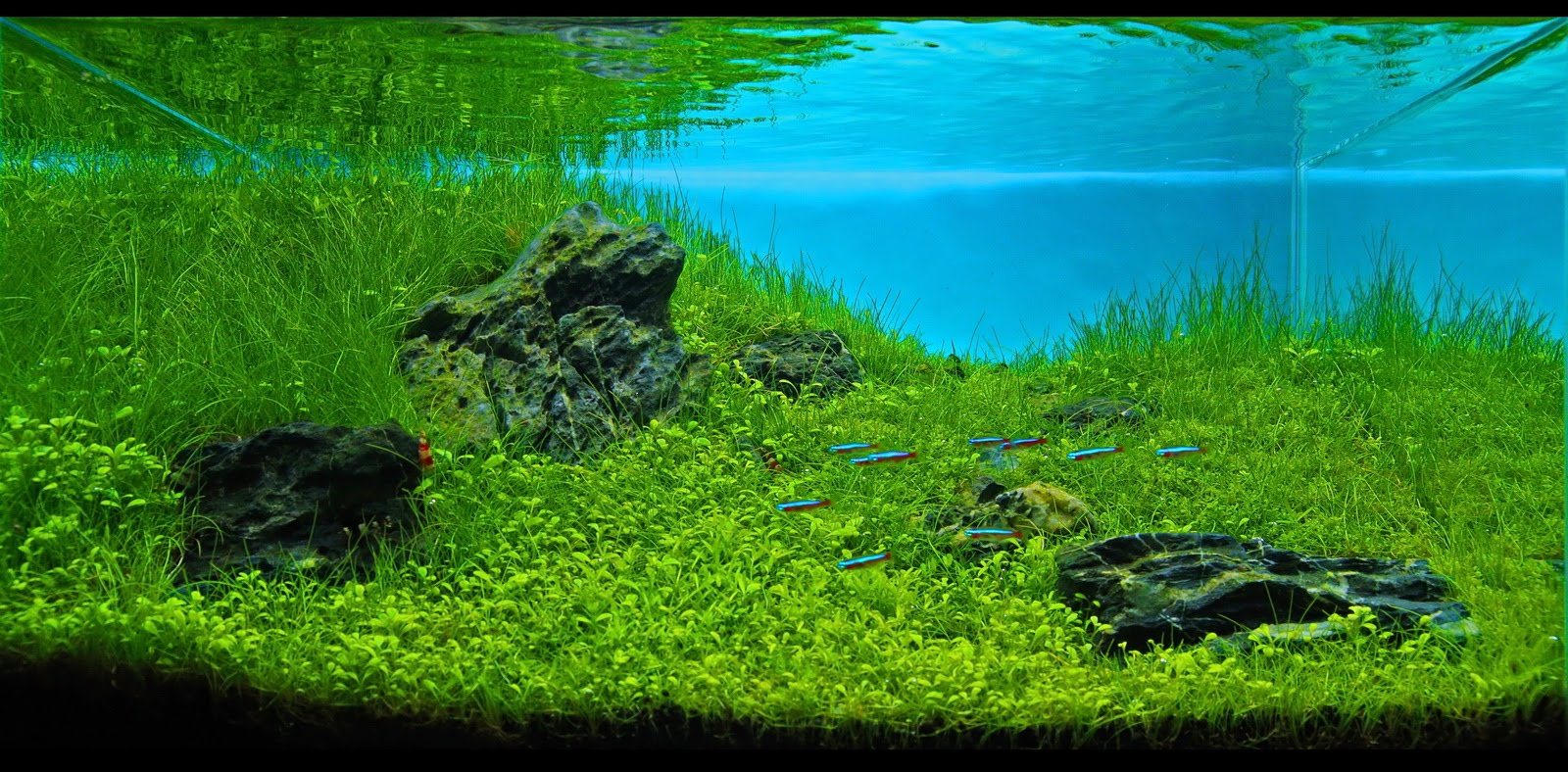 Manage your freshwater aquarium, tropical fishes and ...