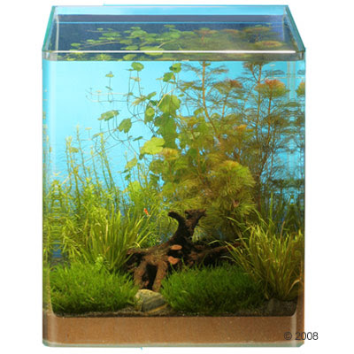 aquarium, tropical fishes and plants: Top 10 tips for a beauty Nano
