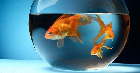 manage your freshwater aquarium tropical fishes and plants feng shui and aquariums. Black Bedroom Furniture Sets. Home Design Ideas