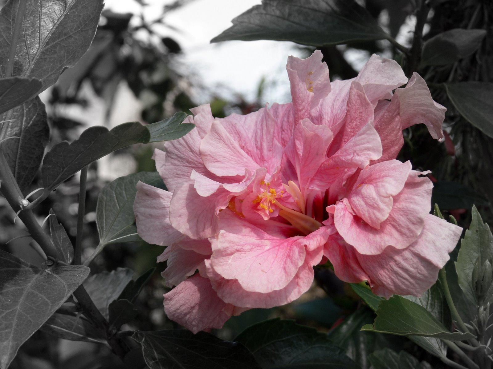 [pinkflowerblur.jpg]
