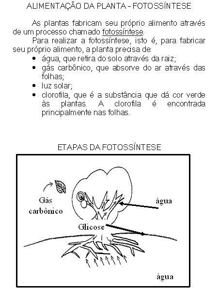 Banco De Atividades Ciências Fotossintese