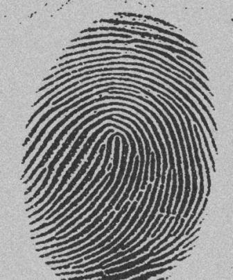 [fingerprint.jpg]