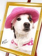 Ana Maria Braga - Promoção Prime Dog's