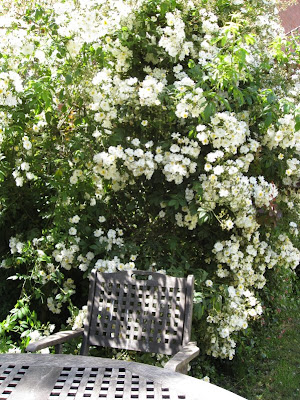 Garden chair among roses
