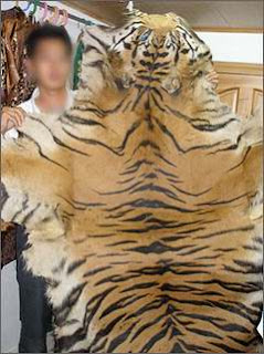 Trade in tiger skin in getting worse