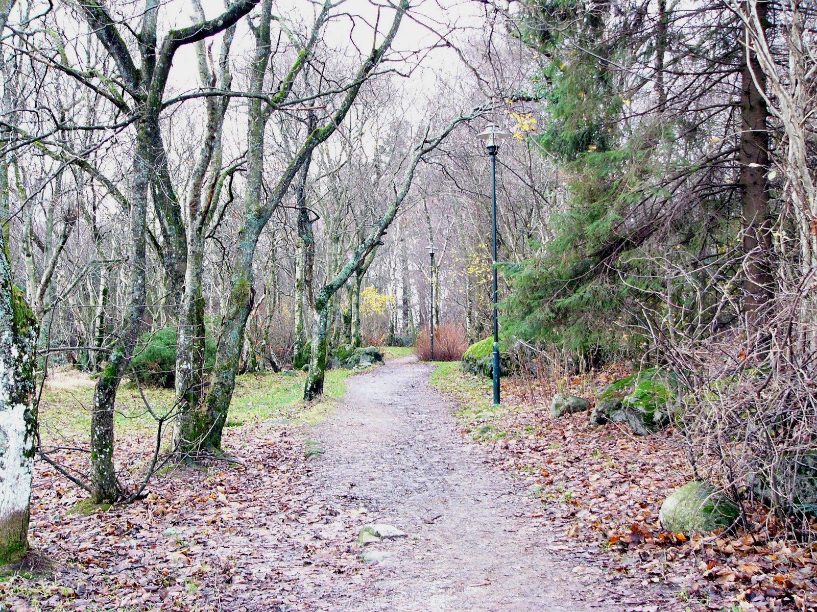 bg bg Autumn+Path2