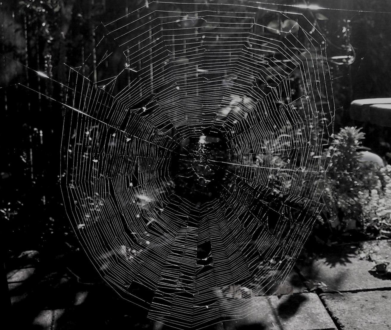 Spider Web Halloween Decorations: The Moonlight Gardener: Spider Web Art
