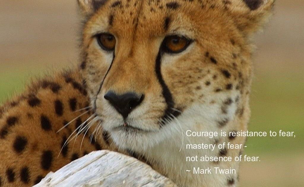 motivational wallpaper animals - photo #15