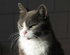 Katten Beppe