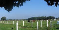 Hästarna på sommarbete på Thyrasgård.