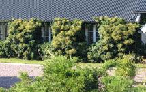 Stallet på Thyrasgård - utsikt från köksfönstret.
