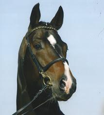 Uttrycksfullt hästhuvud