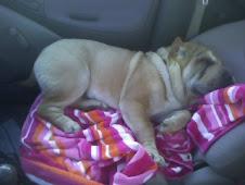 My Pup! Tuck