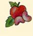 [+maçã.jpg]