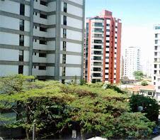 Arborização Urbana em Sorocaba