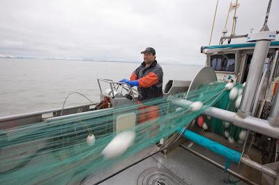 Alaskaphotographics blog part 3 gill net fishing for Gill net fishing