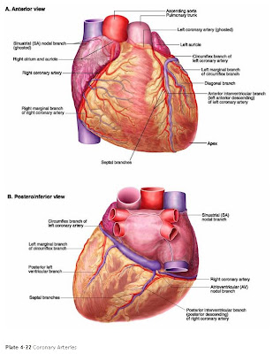 Redesse arteries of heart diagram arteries of the heart diagram ccuart Gallery