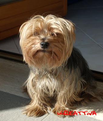 il mio cagnolino dolly