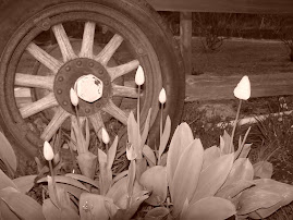 Old Wagon Wheel and flowers