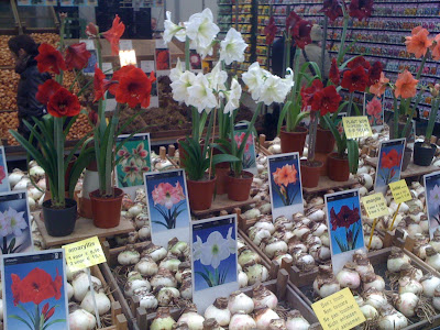 Amsterdam Flower Market, flowers, plants, flower market, tulips, amaryllis