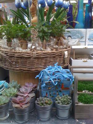 Amsterdam Flower Market, succulents, cacti
