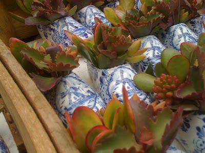 Amsterdam Flower Market, flowers, plants, succulents, succulent planter, Dutch clog, delft blue pottery, jade plant