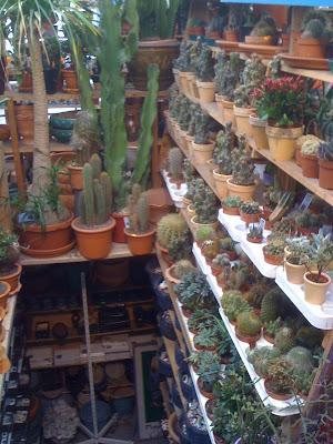 Amsterdam Flower Market, plants, succulents, cacti, cactus
