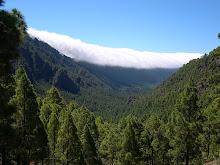 Cabildo de La Palma.