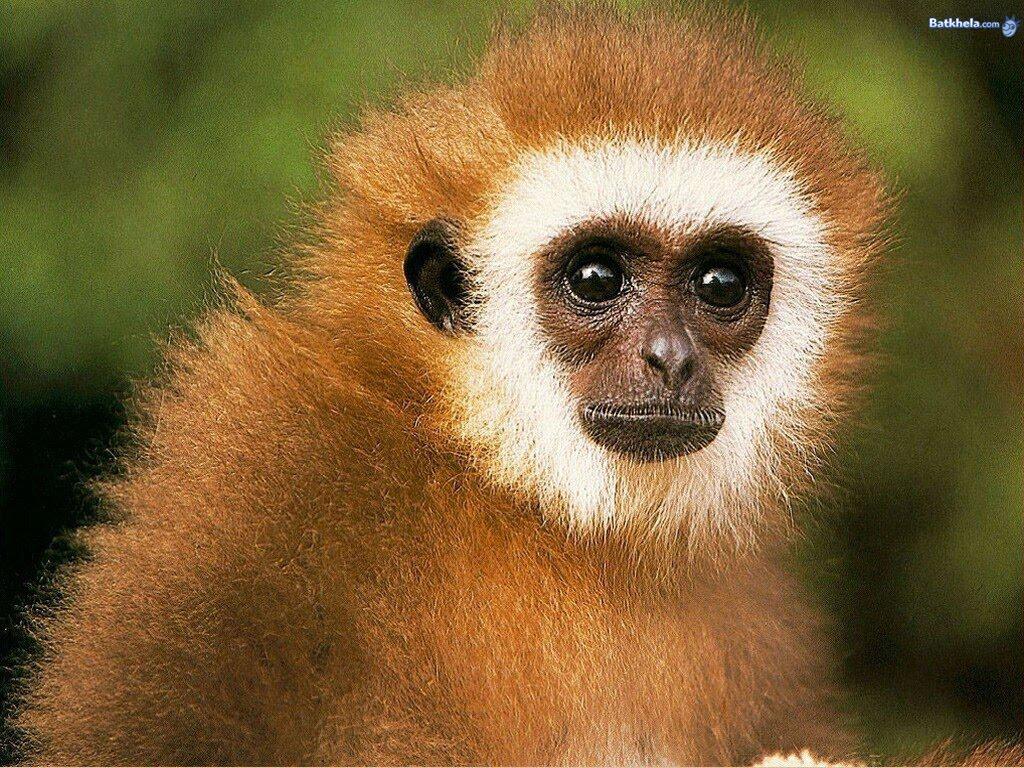 animal faces graphics face animals digital monkey human humans monkeys half