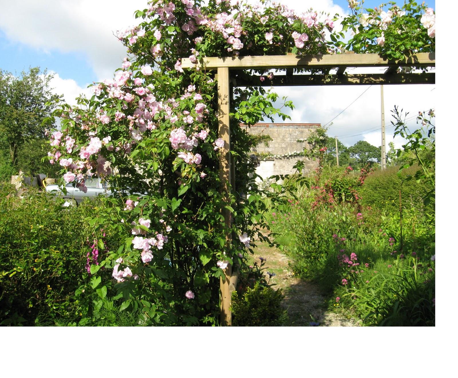 le jardin de nachu rosiers parfum s. Black Bedroom Furniture Sets. Home Design Ideas